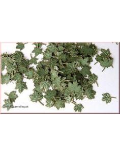 Grüne Blätter - Ahorn