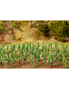 36 cornplantes