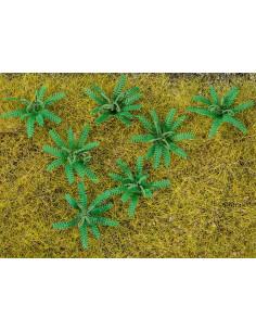 12 Ferns