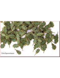 Green leaves - oak